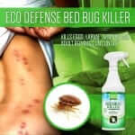 bed bugs cleaning service company